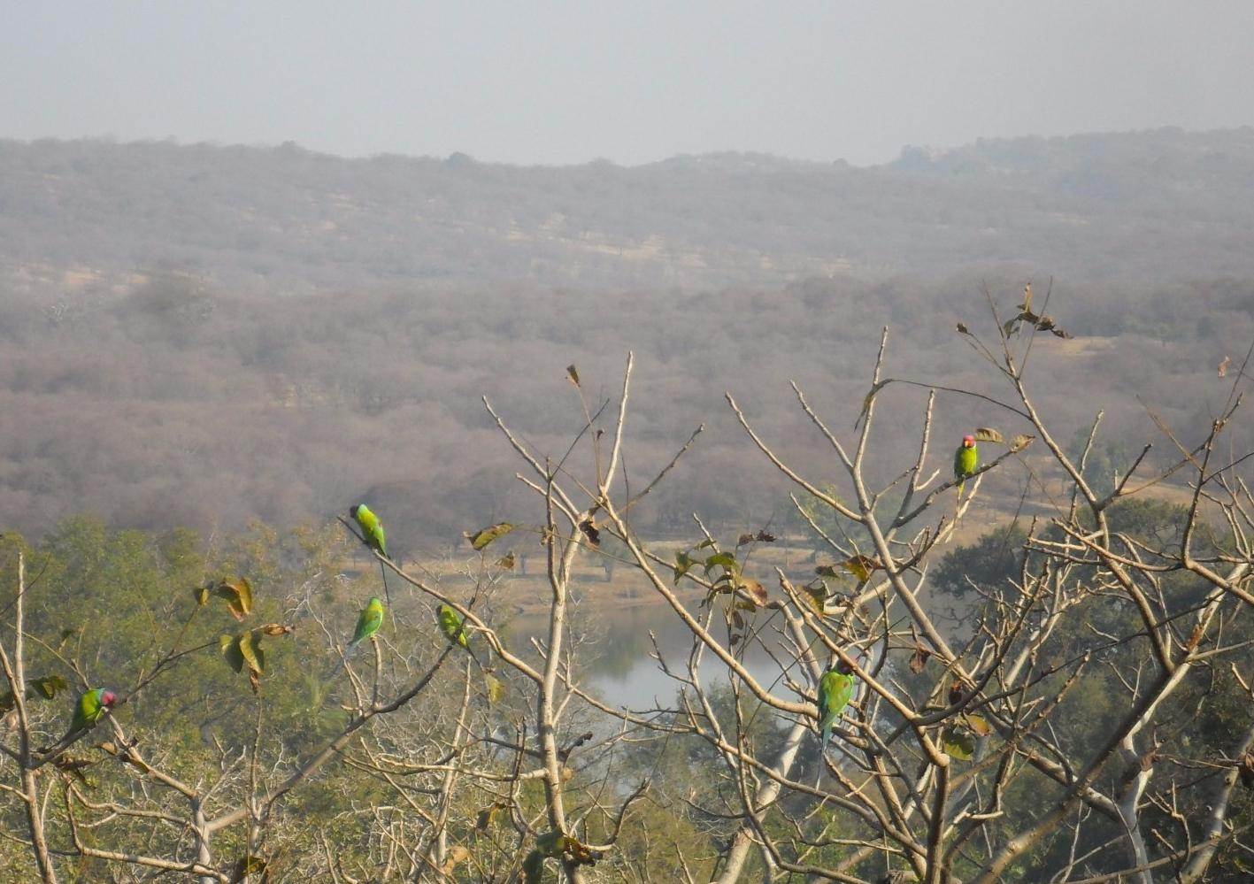India 330
